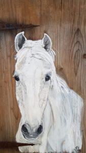 Pferd-weiss